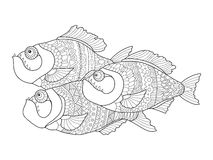 Piranha coloring book for adults vector Stock Photography