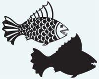 Piranha de poissons Photo libre de droits