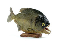 Piranha, fish of brazil Stock Images