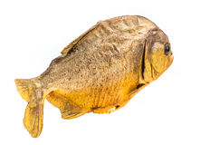 Piranha fish on isolated. With white background Stock Photo