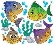 Piranha fishes collection Royalty Free Stock Images