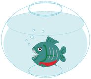 Piranha in love in a fishbowl Stock Photos