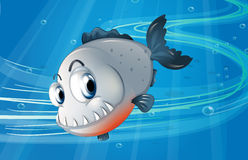 A piranha under the sea. Illustration of a piranha under the sea Stock Photography