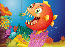 A piranha under the sea Royalty Free Stock Image