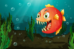 A piranha under the sea with seaweeds. Illustration of a piranha under the sea with seaweeds Stock Image