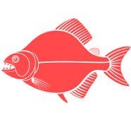 Piranha Royalty Free Stock Photo