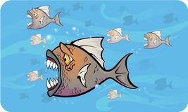 Piranhas attack Royalty Free Stock Images