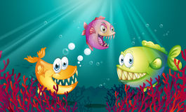 Piranhas under the sea with corals Stock Images