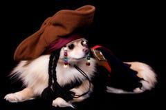 Pirata di Pomeranian Fotografia Stock Libera da Diritti