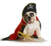 Pirata do cão Fotografia de Stock Royalty Free