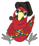 Pirate bird smoke. Pirate parrot in black hat sit and hold pipe on his break Stock Photo