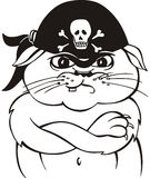 Pirate cat Stock Image
