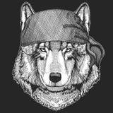 Pirate de Wolf Dog Cool, marin, seawolf, marin, animal de cycliste pour le tatouage, T-shirt, emblème, insigne, logo, correction  Photo stock