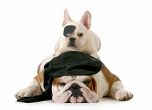 Pirate dogs Royalty Free Stock Photo