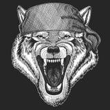 Pirate frais animal de Wolf Dog Wild, marin, seawolf, marin, animal de cycliste pour le tatouage, T-shirt, emblème, insigne, logo Photos libres de droits