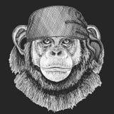 Pirate frais de singe de chimpanzé, marin, seawolf, marin, animal de cycliste pour le tatouage, T-shirt, emblème, insigne, logo,  illustration de vecteur