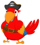 Pirate parrot cartoon Stock Images