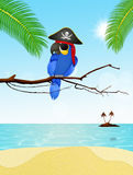 Pirate parrot on the island Royalty Free Stock Photography