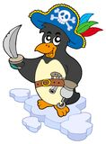 Pirate penguin Stock Images