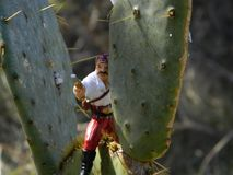 Ouch! Pirate sitting on cactus looking for the element of surprise. Pirate sitting on cactus, he has a weapon and is hiding in order to get the element of stock photo