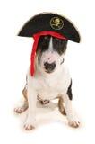 Piratkopiera hunden Arkivbild