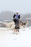 Pirena Advance 2012 sleigh race Stock Images