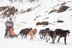Pirenia FortschrittsPferdeschlittenrennen 2012 stockbilder