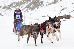 Pirenia FortschrittsPferdeschlittenrennen 2012 Lizenzfreies Stockfoto