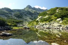 Pirin 44 Royalty Free Stock Photo