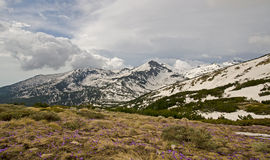Pirin berg Arkivbilder