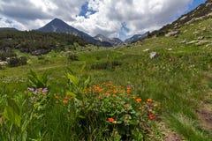 Pirin-Berglandschaft mit Wolken-ADN-Blumen Stockfotos