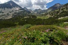 Pirin góry krajobrazu whit chmury adn kwiaty Zdjęcie Royalty Free