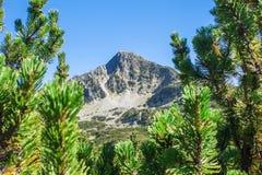 Pirin mountain, Bulgaria. Beautiful mountain peak among pine trees in Pirin mountain, Bulgaria Stock Photography