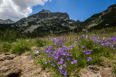 Pirin Mountain Landscape with flowers Royalty Free Stock Images