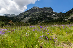 Pirin Mountain Landscape with flowers Royalty Free Stock Photo