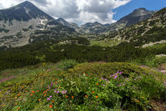 Pirin Mountain Landscape whit cloud adn flowers. Bulgaria royalty free stock photo