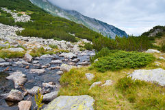 Pirin Mountain Stream Stock Image