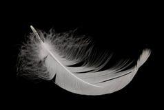 piórkowy łabędź Fotografia Royalty Free