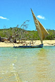 Pirogue beach seaweed   indian   madagascar Stock Photography