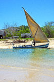 Pirogue beach seaweed in indian ocean madagascar  home Royalty Free Stock Image