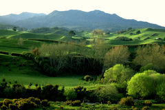 Pirongia Landscape-New Zealand. Rolling sheep and beef farm country in the Waikato area of New Zealand with Mount Pirongia in the background Royalty Free Stock Photos