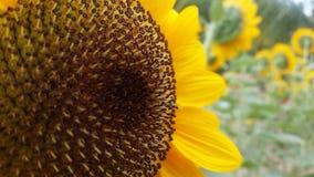 Piruleta de la sol Fotografía de archivo