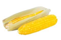 Épis de maïs bouillis Images libres de droits