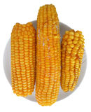 Épis de maïs bouillis d'isolement sur le blanc Photographie stock