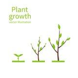 Pisa a árvore do crescimento ilustração royalty free