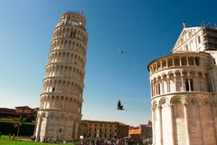 Pisa tower in Italy with bird Stock Photography