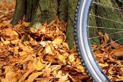 Pisada de la rueda y del neumático de la bici de montaña Imagen de archivo