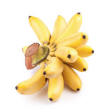 Pisang Mas  on white background Royalty Free Stock Images