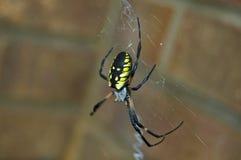 pisanie pająka Fotografia Royalty Free