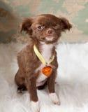Pisc o cão de filhote de cachorro Fotos de Stock Royalty Free